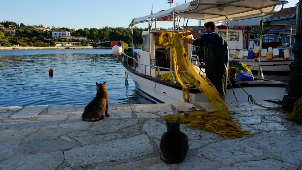 Boat rental Boréal Boréal 44 in Kalafationes on Samboat