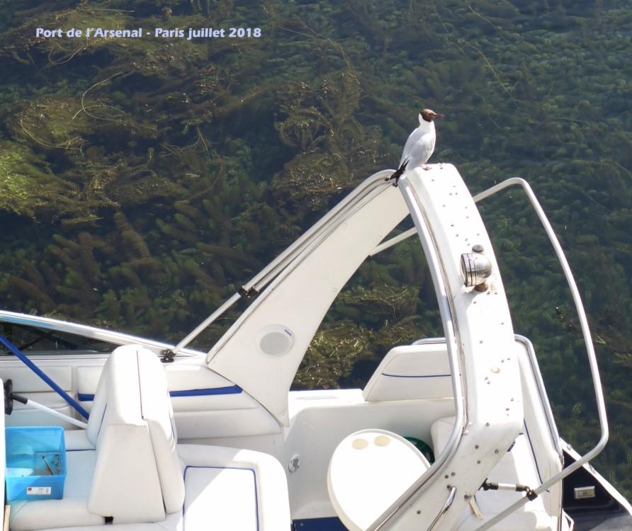 Boat rental Draveil cheap 1400 AK