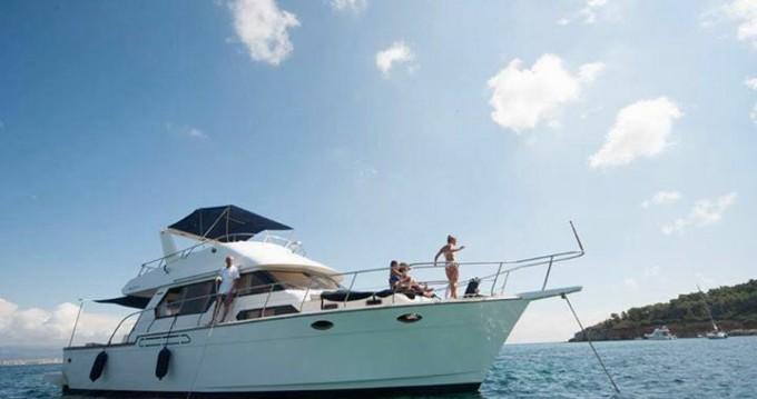 Rental Yacht angel marine  with a permit