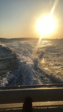 Boat rental Solemar 28 offshore in Piombino on Samboat