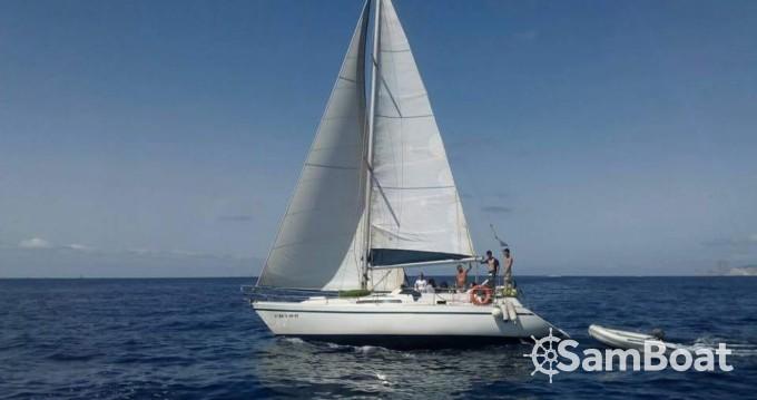 Boat rental Puma Puma 37 in Ibiza Town on Samboat