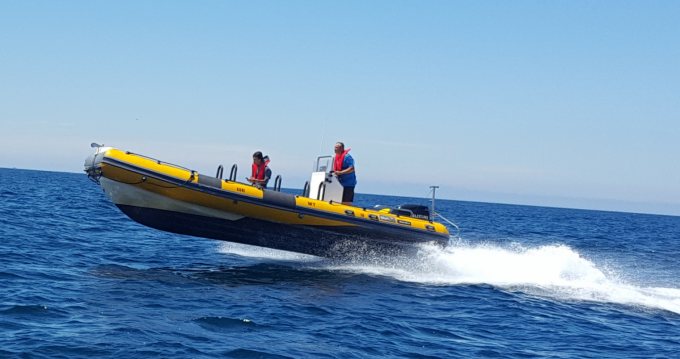 Hire RIB with or without skipper Bwa Peniche