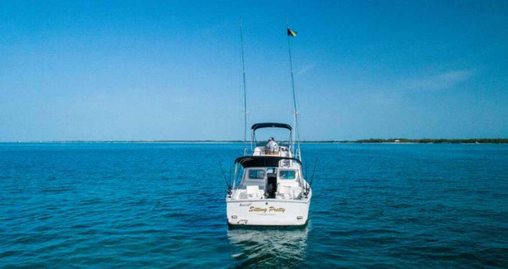 Rental yacht Nassau - Bertram 31 foot on SamBoat