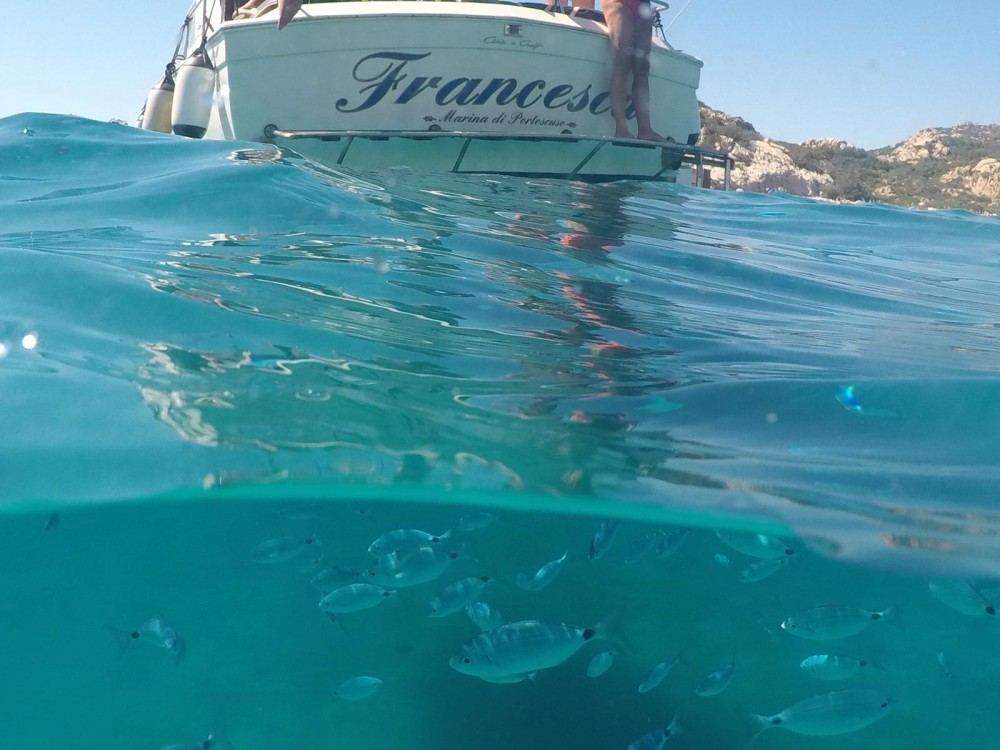 Boat rental Porto Pozzo cheap Chris Craft 31 Sport Express