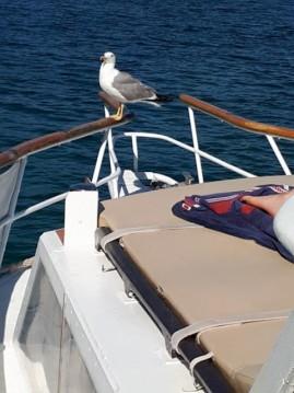 Rental yacht Crikvenica - Polaris  38 on SamBoat