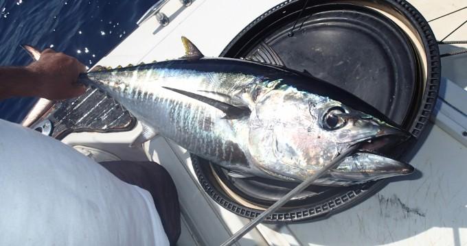 Rent a Boston Whaler fisherman Torre Pali