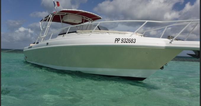 Boat rental Intrepid 339 WALKAROUND in Sainte-Rose on Samboat