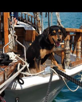 Rental yacht Crikvenica - GAJETA EX-LIFEBOAT on SamBoat