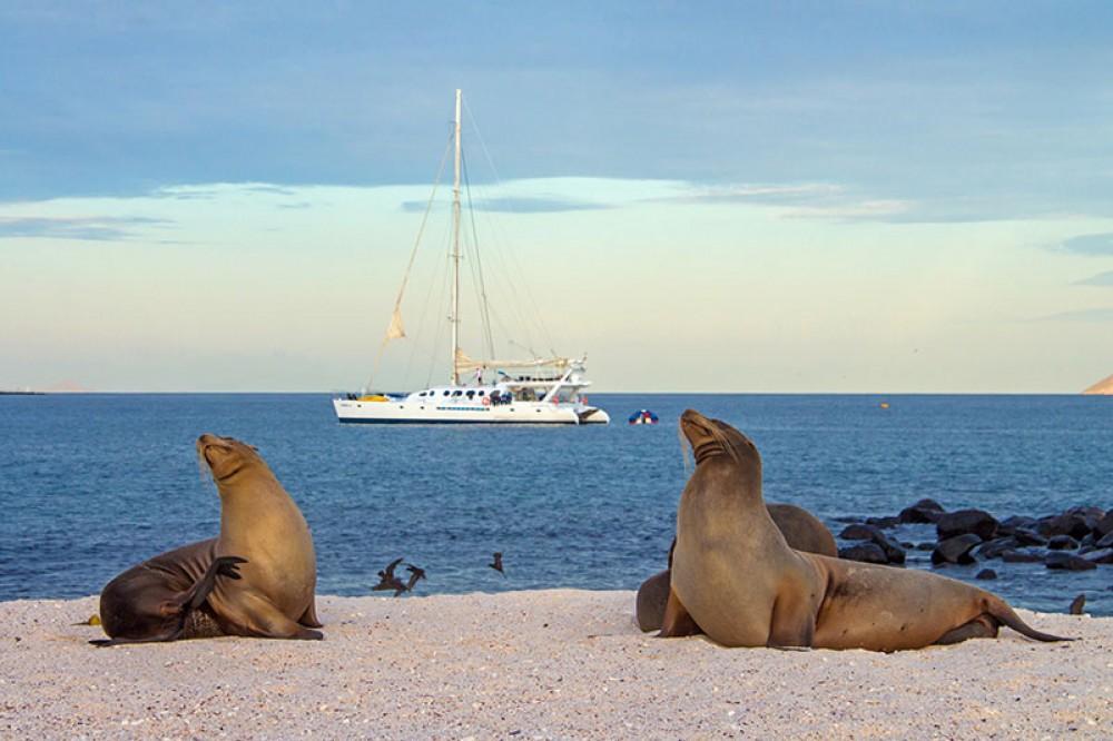 Rental Catamaran in Galápagos - Nemo III