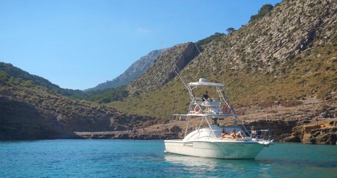 Boat rental PURSUIT  OFFSHORE 3000 in Pollença on Samboat