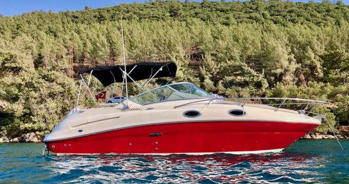 Boat rental Bodrum cheap Sea Ray Sundancer 240