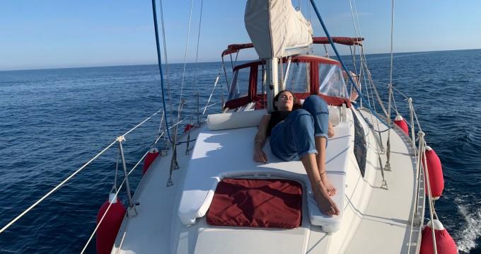 Boat rental Puerto José Banús cheap Sun Light 31