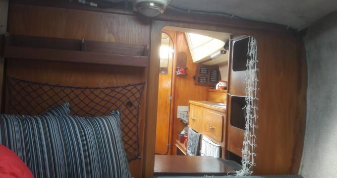 Boat rental Wrighton Biloup 77 in Gravelines on Samboat