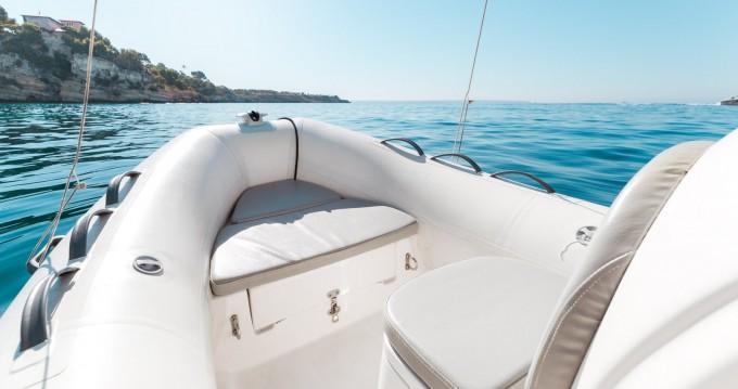 Boat rental Protender 400 in Palma de Mallorca on Samboat