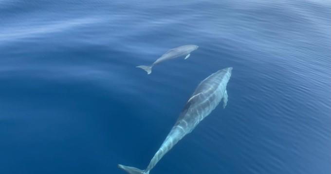 Rent a Sea Ray Sea Ray 160 BR Puerto Deportivo de Fuengirola